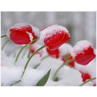 Kar Fotoğrafı Çekmek İçin İpuçları