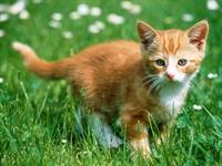 Kedi, 3800 Km Yol Katedip Sahibine Kavuştu