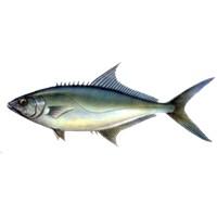 Deniz Balık Türleri Nelerdir?
