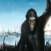 Maymun İle İnsanın Melezi Mümkün Mü?