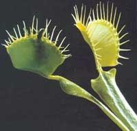 Bu Bitkilerin Yaşayış Biçimlerine Hayran Olacaksın