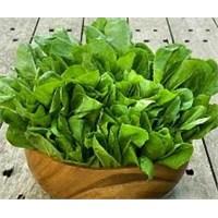 Yeşil Yapraklı Sebzelerin Temizliği Nasıl Olmalı?