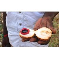 Zanzibarda Baharat Turu