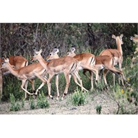 Kenya'da Safari 2.Bölüm