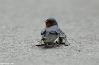 Bir Kuşun Hazin Aşkı
