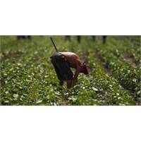 Çin Ukrayna'dan 3 Milyon Hektar Arazi Kiralıyor
