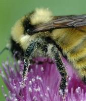 Arılar Kansere Umut Oldu...