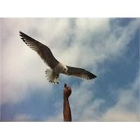 Türkiye'de Kuş Gözlemciliği