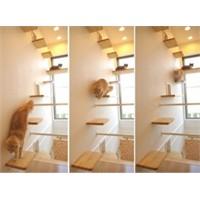 Kedi Sevgisi Dekorasyona Yansıyor