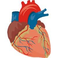 Kalp Damar Hastalıklarından Nasıl Korunulur?