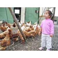 Hayvanları Seven Çocuklar Topluma Daha Rahat Uyum
