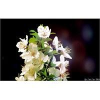 Spring Blossom…
