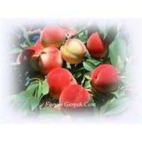 Şifa Kaynağı Meyveler