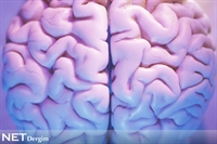 Kadın Ve Erkek Beyninin Farkları Neler?