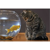 O Minik Dilinizi Kavanozumdam Çekiniz, Bay Kedi!