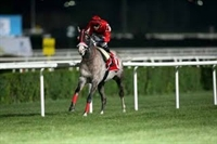 Turbo Yarış Atı