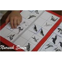 Kuşlu Eşleştirme Kartları İle Oyunumuz