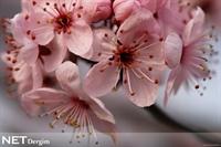 Bahar Havası Sizi De Çarpmasın!