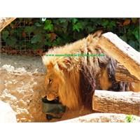 Barcelona Hayvanat Bahçesi -2-