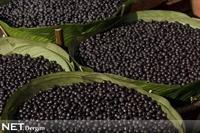 Mucize Meyve Acai Üzümünün Faydaları