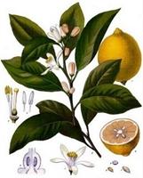 Limon Diyeti  Tarifi