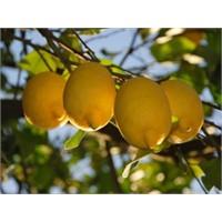 Limonun 24 Faydası