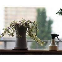Bitkileriniz İçin Organik İlaçlar Yapın