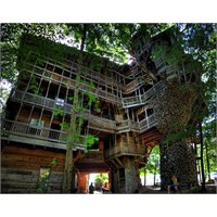 Dünyanın En Yüksek Ağaç Evi