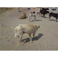 4 Ekim Hayvanları Koruma Günü…