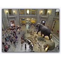 Doğa Tarihi Müzesi | 1869 - Washington