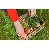 Organik Gıda Besleyici Mi Değil Mi ?