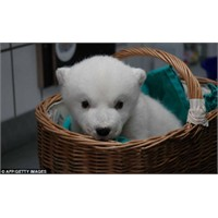 Knut'un Ölümüyle Güne Uyanmak