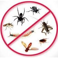 Böcek Zehirleri Hakkında Bilmediklerimiz