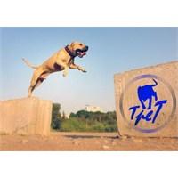 Süper Köpek Tret