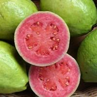 Mucize Bir Meyve Guava Mutlaka Deneyin