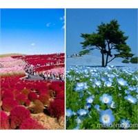 Japonya'dan Renkli Bir Kent Parkı