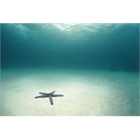 Deniz Suyu Niçin Tuzludur?