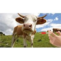 Süt Dosyası 7 - Süt Ve Antibiyotik