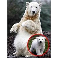 Hayvanlar Dünyasından Satır Başları (3)