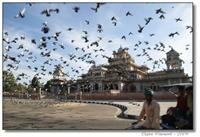 Hindistan Çarpıcı Fotoğraflar
