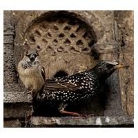 İstanbullular Kaçırmayın Bu Kuşsarayını