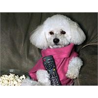 Köpek Giysisi Giyilebilir Battaniye