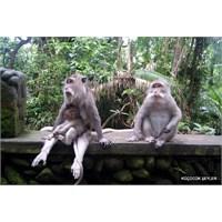 Maymunlardan Öğrendiklerim