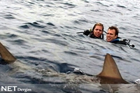 Artık Köpekbalıklarından Korkmayın