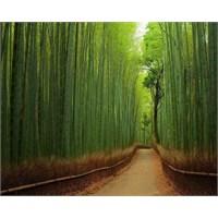 Bambu Ormanları