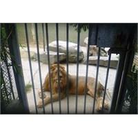 Faruk Yalçın Hayvanat Bahçesi Ve Botanik Parkı