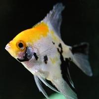 Balık Mutluluk Verıyor
