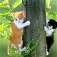 Kedilerin Hayatı
