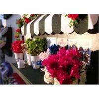 Çiçekçi - Sürpriz Hediye