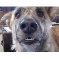 Konuşan Köpek Videosu Youtube'da Rekorlar Kırdı